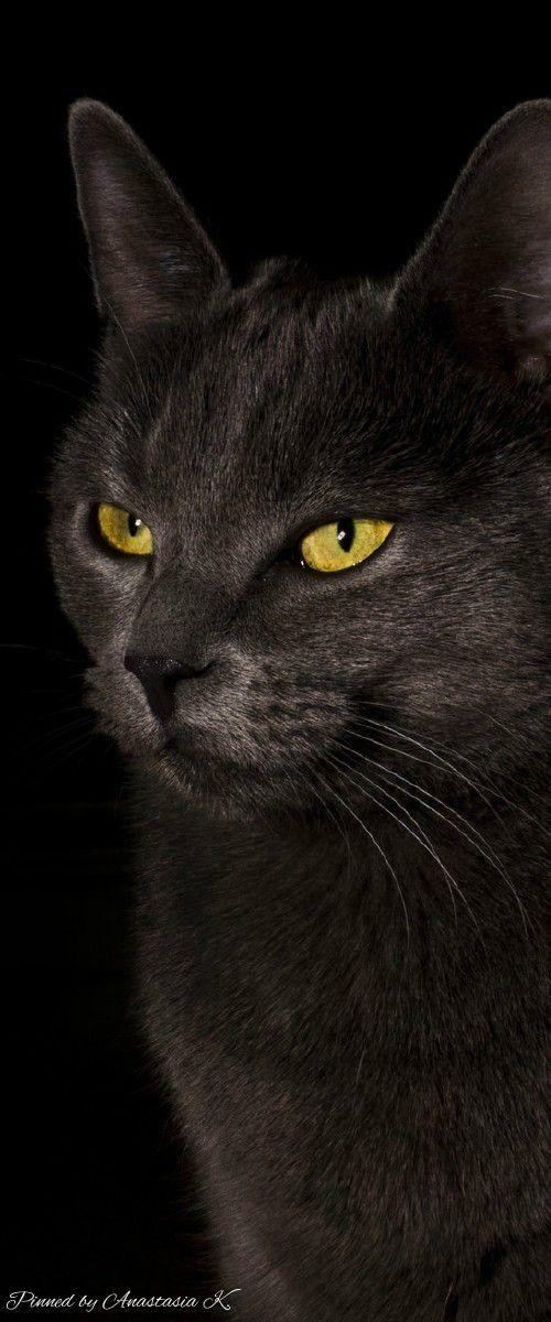 Schwarze Katze Mit Gelben Augen With Images Beautiful Cats