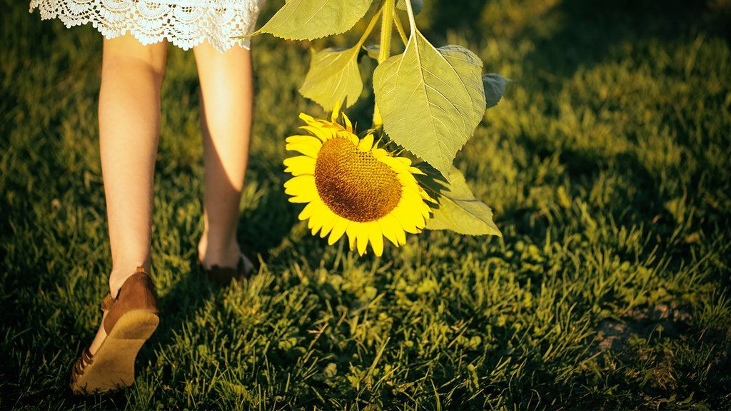 7 Tips For Growing a Sunflower Garden is part of Sunflower garden, Planting sunflowers, Garden, Growing sunflowers, Organic seeds, Organic vegetable seeds - Choose your favorite Sunflower varieties and follow along with these tips to grow a beautiful Sunflower oasis in your home garden
