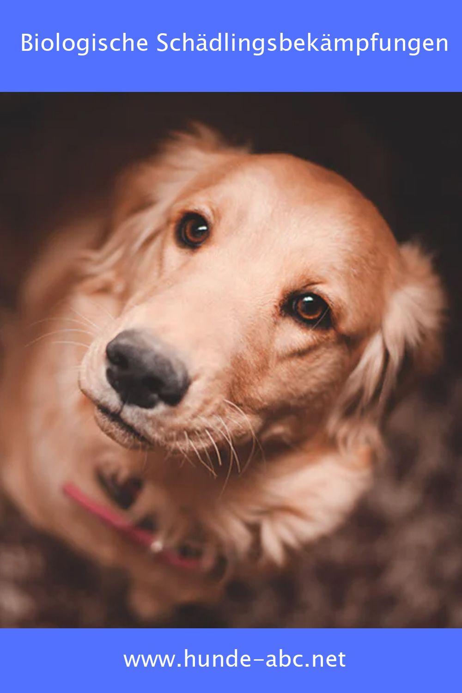 Ungezieferbekampfung Fur Hunde Onlineshop Gunstig Kaufen In 2020 Hundenamen Hunde Golden Retriever
