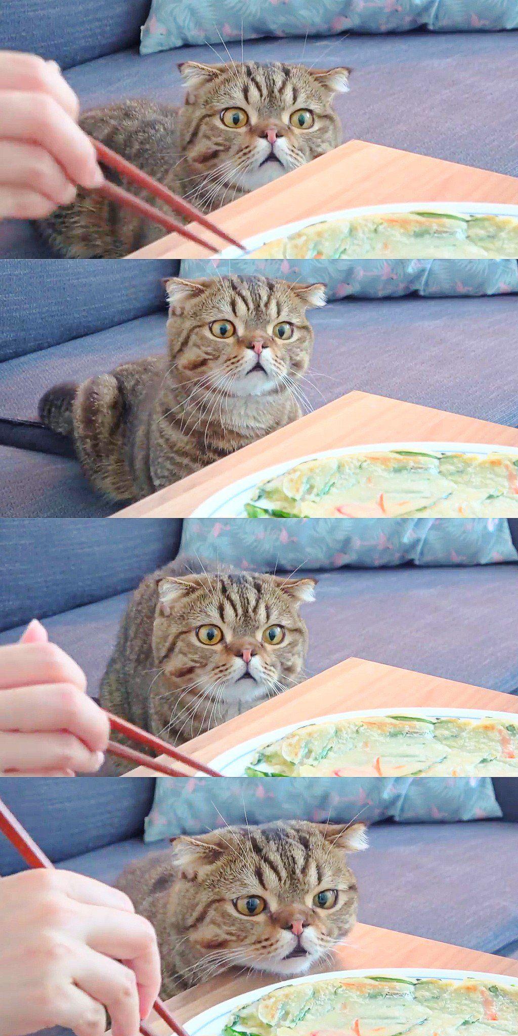 Creamheroes Lulu Cake Anak Kucing Anak Kucing Lucu Kucing Cantik