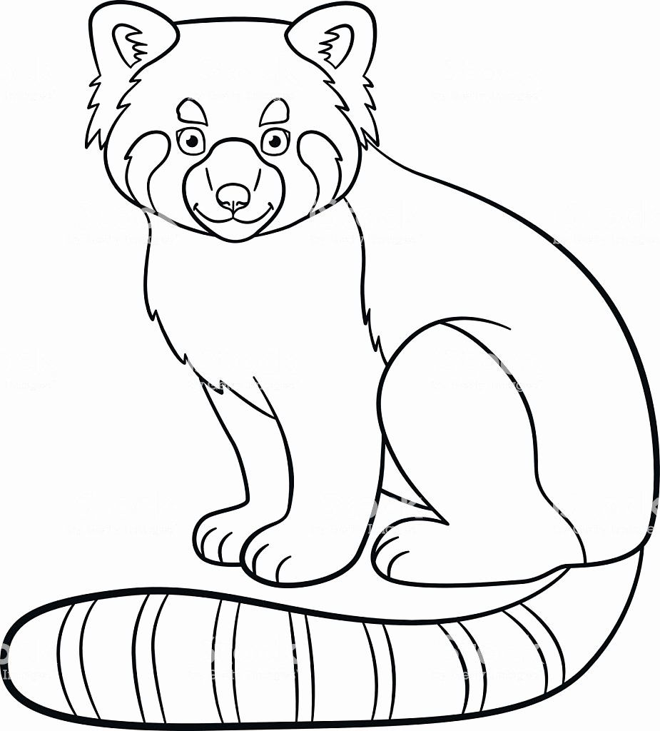 Red Panda Coloring Page Lovely Coloring Pages Little Cute Red Panda Smiles Stock Vect Panda Coloring Pages Coloring Pages For Boys Valentines Day Coloring Page