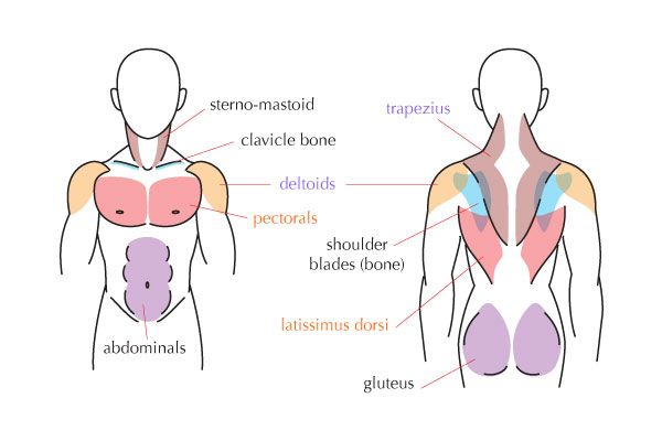 Pin By Ayesha Shariff On Projects To Try Pinterest Human Anatomy