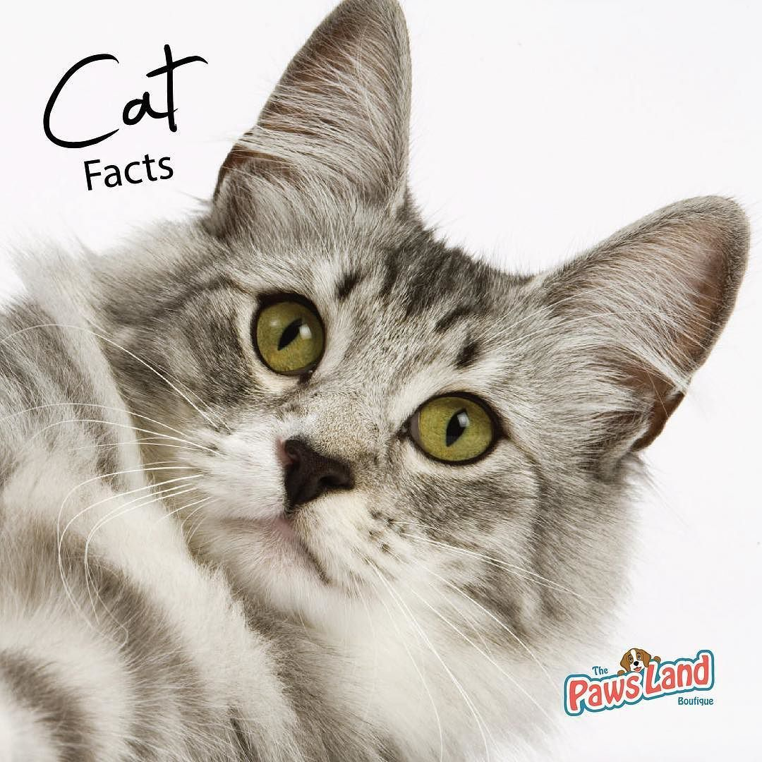 One Study Found Neutered Male Cats Live 62 Longer Than Unneutered Ones Cats Meowformation Cats Cats Iphone Ipad Wallpaper