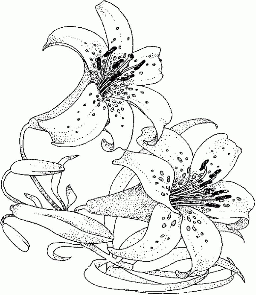 Water lily flower coloring pages -