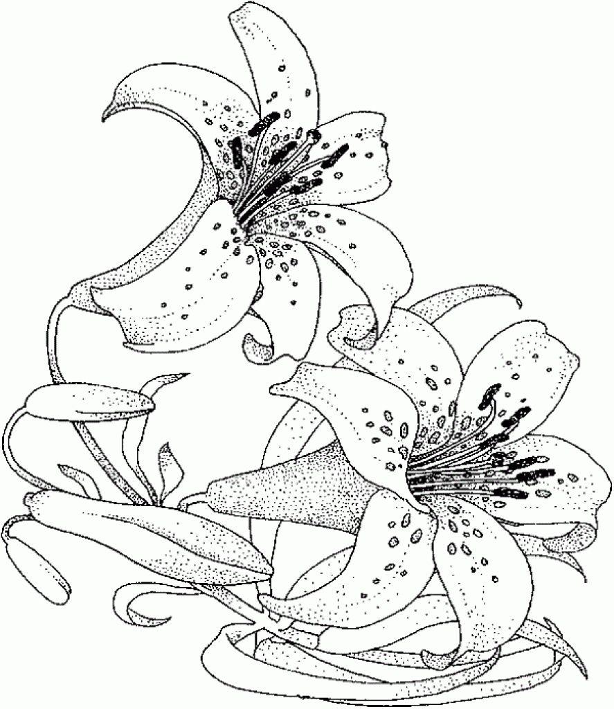 Realistic And Detailed Water Lily Flower Coloring Page For Adults Letscolorit Com Malvorlagen Blumen Blumenzeichnung Ausmalbilder