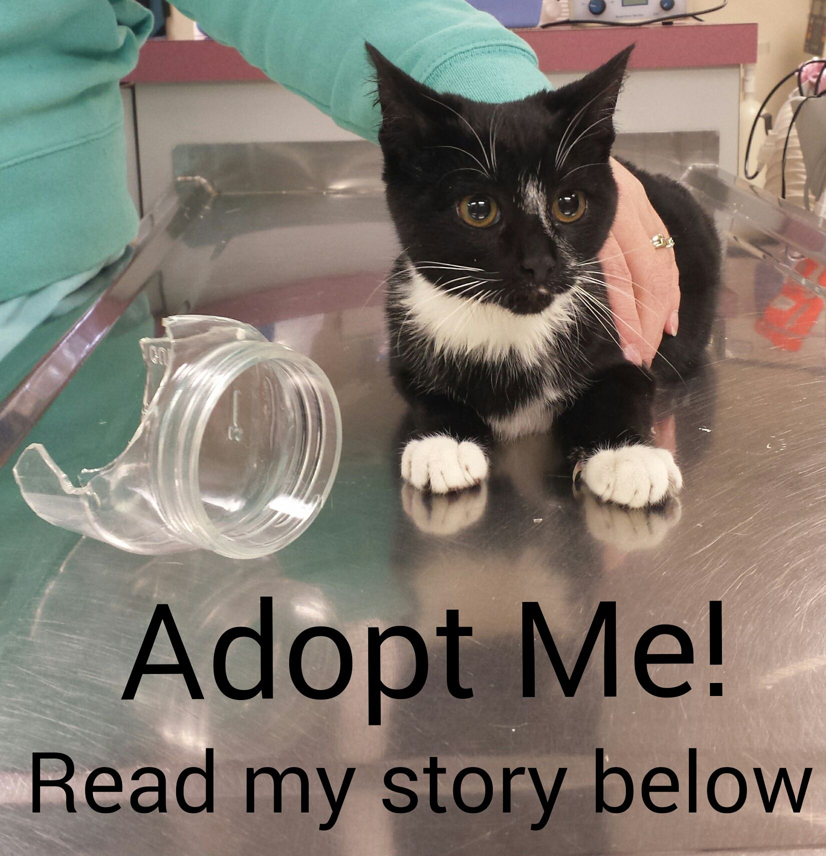 This Girl Needs A Forever Home Thanks To Our Good Samaritan For Rescuing This Kitten She Was Found With The Pictured Pet Clinic Pet Adoption Feline Leukemia