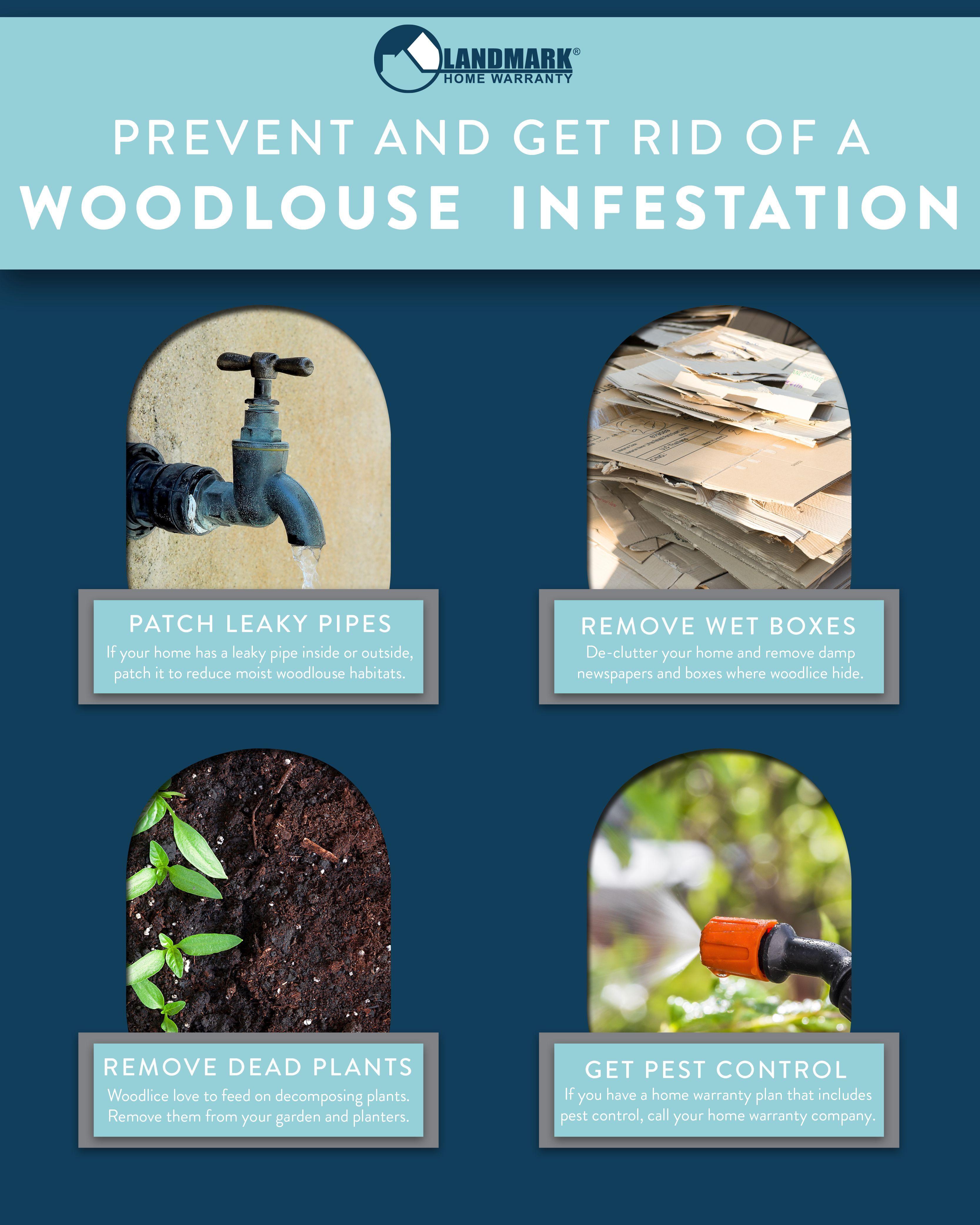 Undefined Pest Control Pests Woodlouse