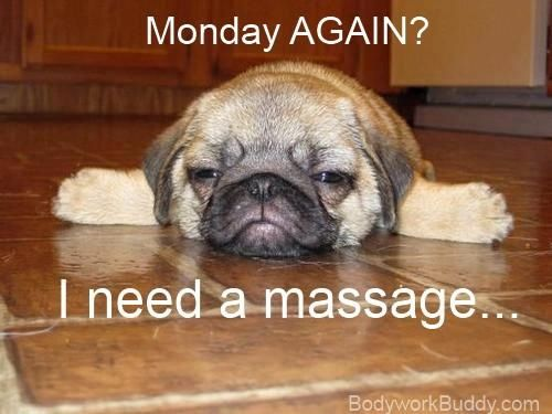 Fort Wayne Massage Pugs Pugs Funny Massage Therapy