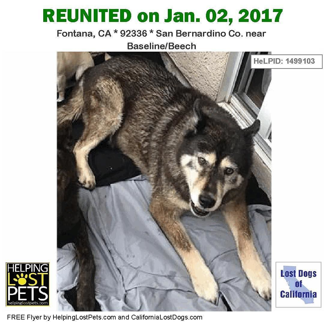 Reunited The Husky Found In Fontana Ca Has Been Reunited With His Family Found Jan 01 2017 Reunited Jan 02 2017 Welcome With Images Losing A Dog Dogs Losing A Pet