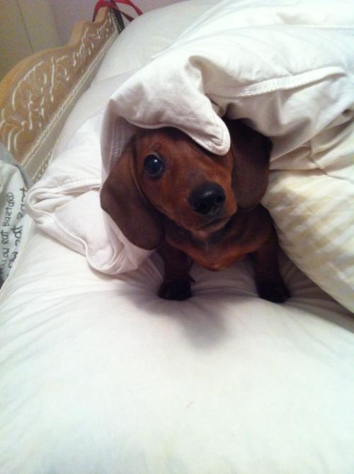 Good Morning Sleepyhead!