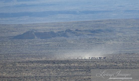 The Final Days of the Checkerboard Wild Horse Roundup, day #23. October 2014 Part I | Straight from the Horse's Heart