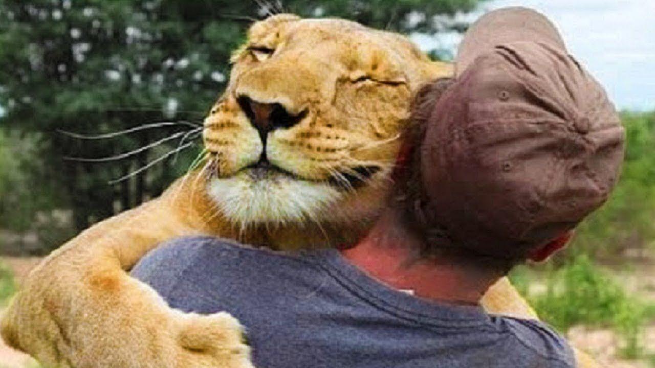Animals Hugging People Animals Hugging Humans