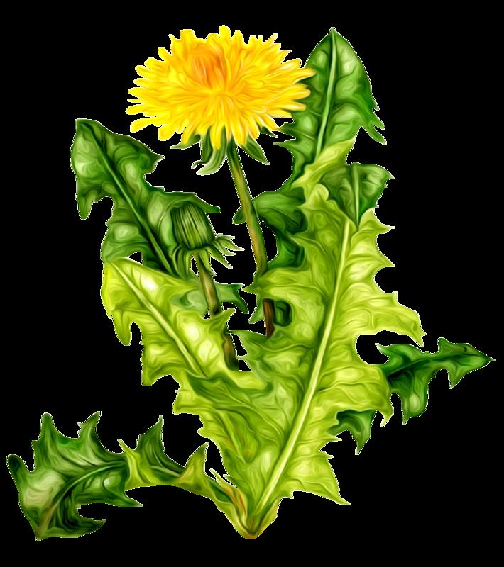 Полевые цветы | Цветы | Цветы, Весенние цветы и Цветок