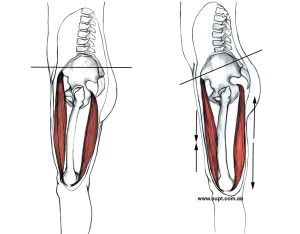 Tight hip flexor overstretched hamstrings anterior pelvic tilt back tight hip flexor overstretched hamstrings anterior pelvic tilt back pain tight quads publicscrutiny Images