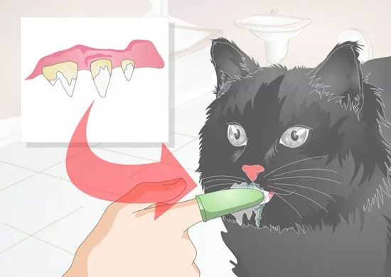Feline Dental Disease