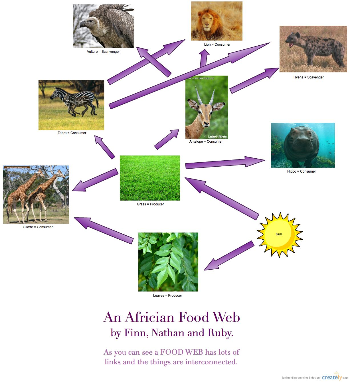Images Of Food Webs And Food Chains