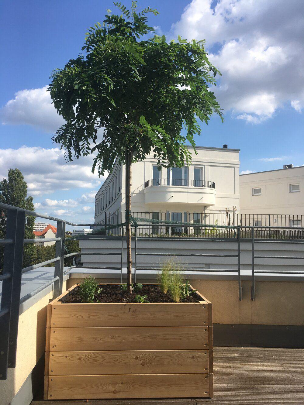 Pflanzgefäße aus Holz — Nelka – Dachterrasse, Balkon, Innenhof – Planung und Ausführung