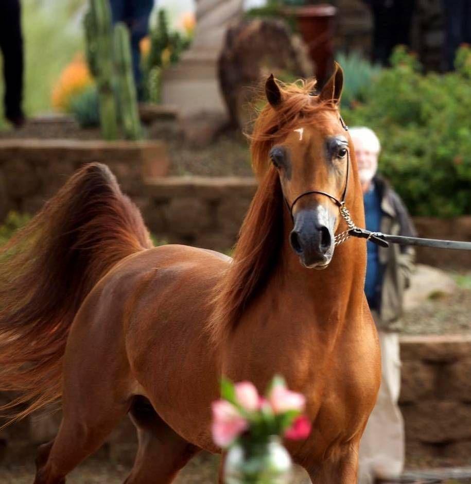 Holland Isn T All Flat You Know Greetings From Epen Zuid Limburg The Netherlands L Beautiful Arabian Horses Horses Arabian Horse