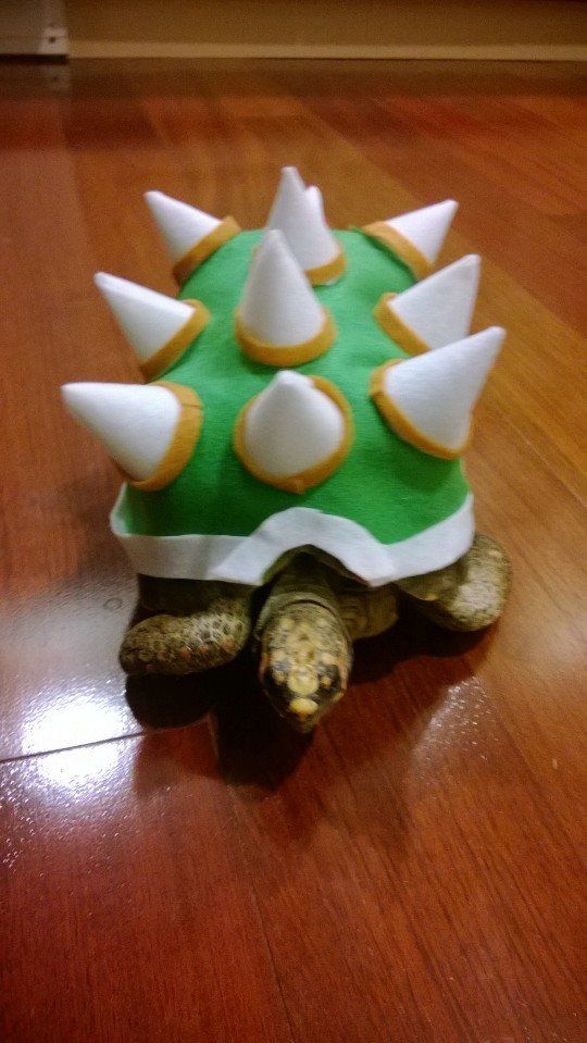Koopa the tortoiseu0027s Halloween costume - Imgur & Koopa the tortoiseu0027s Halloween costume | Turtles!!!! | Pinterest ...