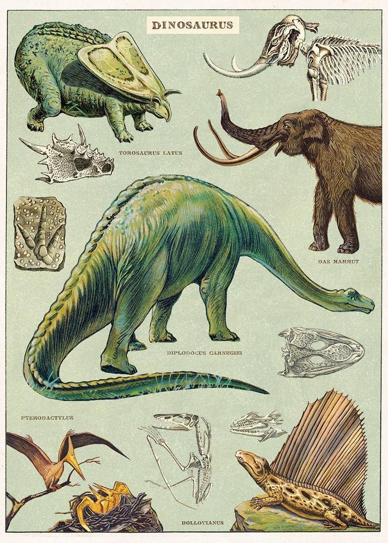 Dinosaur Print Dinosaur Wall Art Dinosaur Home Decor Dinosaurs Print Dinosaur Poster Dinosaur Art Dinosaur Print Boys Room In 2020 Dinosaur Posters Dinosaur Illustration Dinosaur Images