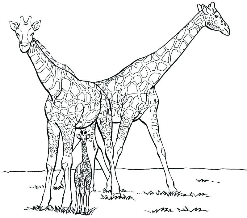 Cute Giraffe Coloring Pages Giraffe Coloring Pages Animal Coloring Pages Cartoon Coloring Pages