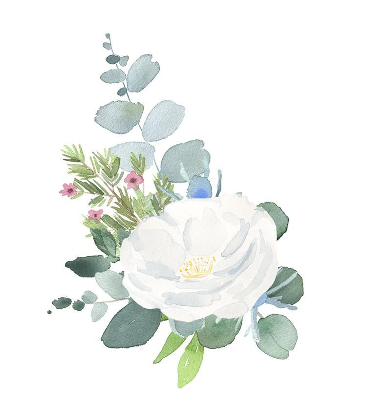 Floral Bouquet Clipart Watercolor Clip Art Flower Png Files With White Roses Thistles And Eucalyptus Leaves Floral Watercolor Floral Poster Watercolor Flowers