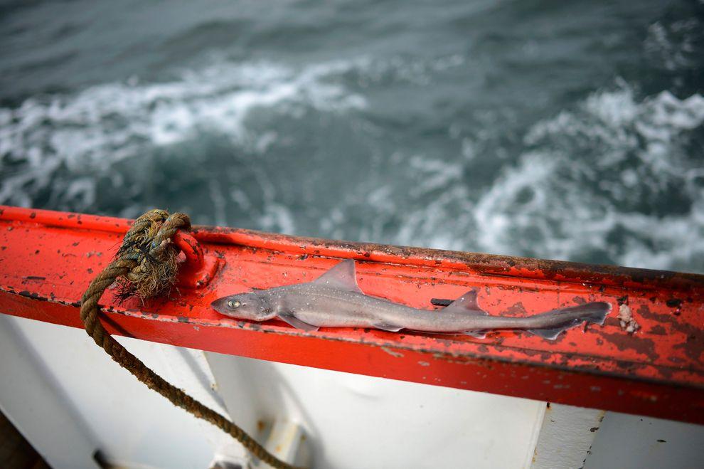 Last of the Trawler Men   Men, North sea, Baby shark