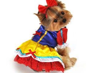 571f6fbcb66 Too cute - Princess Dog Halloween Costume | Dogs | Dog halloween ...