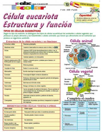 Célula Eucariota Estructura Y Función Edicion Impresa Abc Color Celula Eucariota Eucariota Celulas Eucariotas Animal