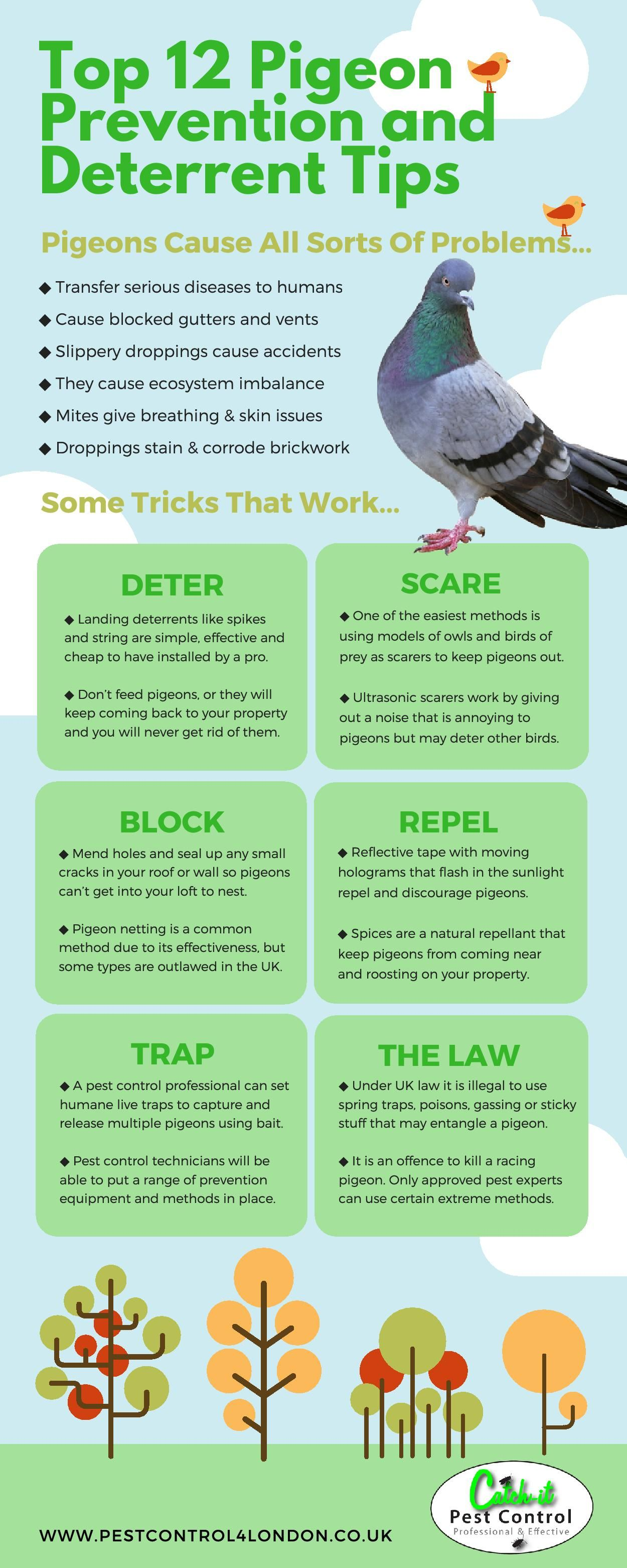 Pin by akellajustus on Do you know how to deter pigeons? | Pigeon pest control, Garden pests, Pigeon