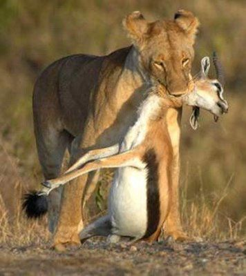 This Another Example Of A Prey Predator Relationship