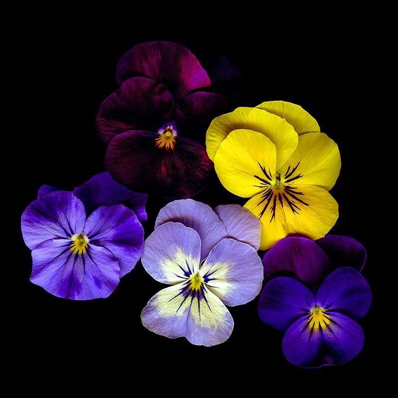 Ph Magda Indigo Fleurs Autres Pinterest Fleurs