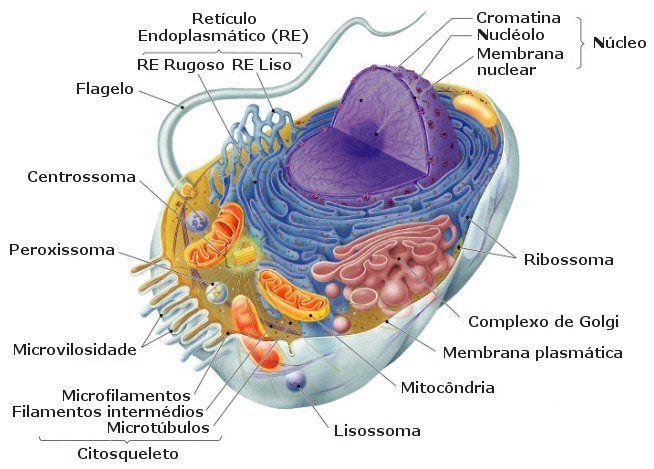 Biologia Icfes Biología Célula Animal Biología Celular