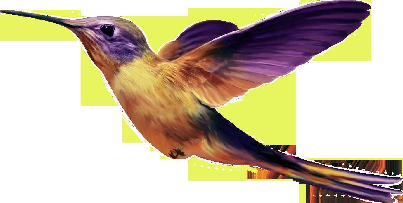 Картинка колибри для детей