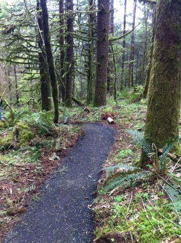 New Growth Trail Loop Explore Oregon Oregon Hikes County Park