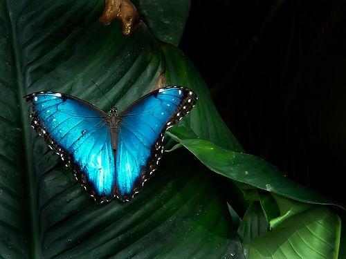De Wondere Wereld van Vlinderfotografie