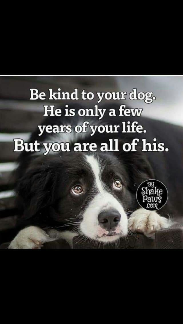 Dog Quotes Love By Nicole De La Cruz On Animals Dog Quotes