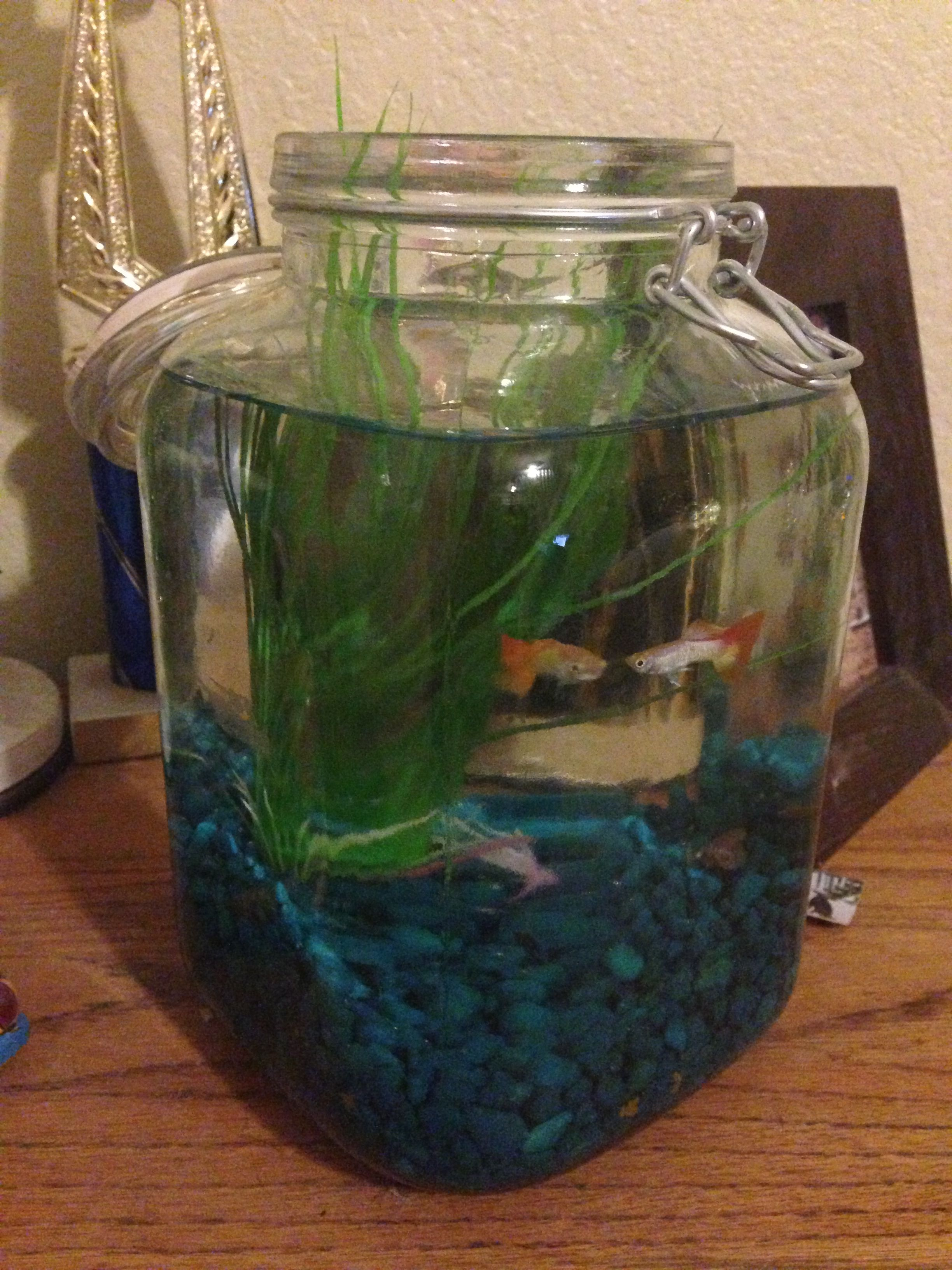 jar from big lots makes an awesome little fish tank diy