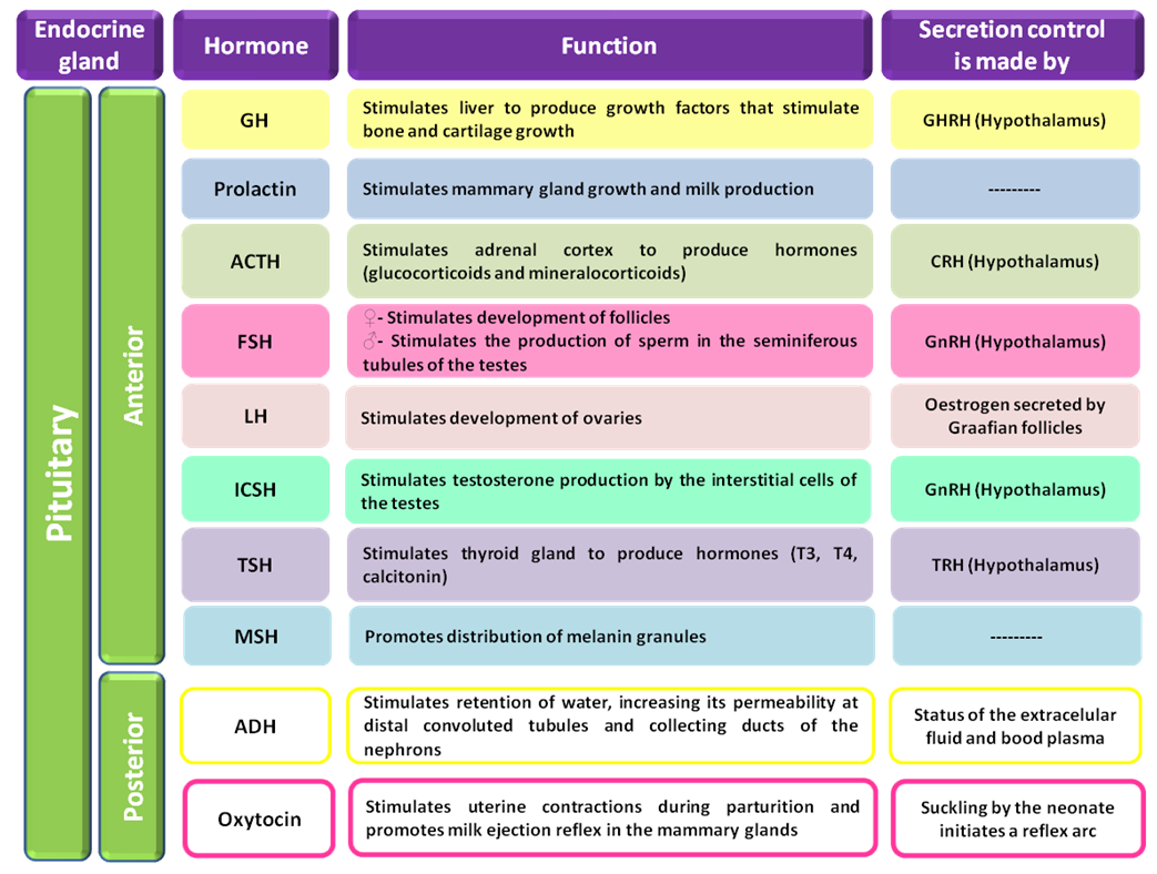 Hormones And Their Functions Table