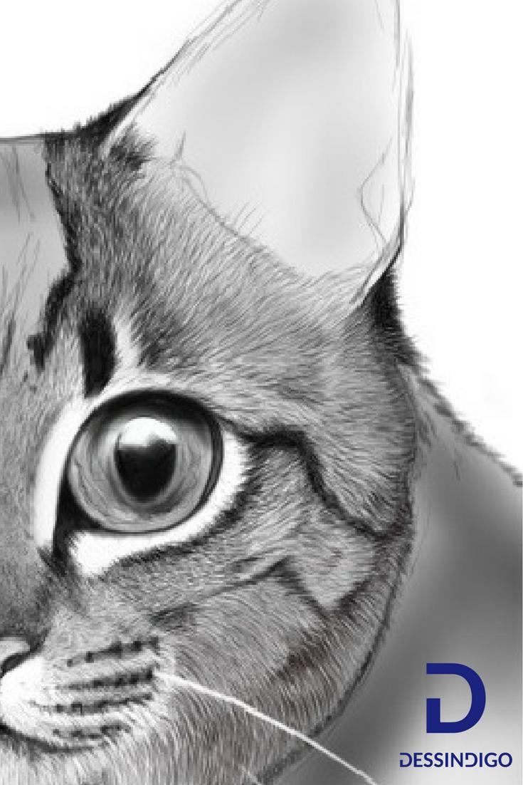 Comment Dessiner Un Chat Cat Drawing Art Drawings
