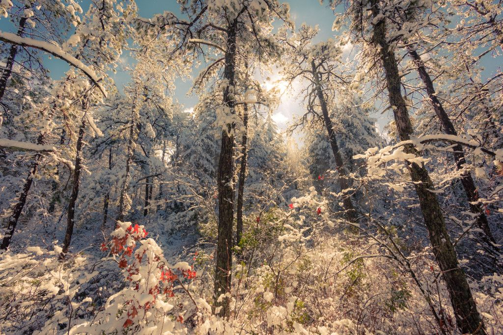 High key landscape photography of fresh fallen snow under sunlight in the New Jersey Pinelands.