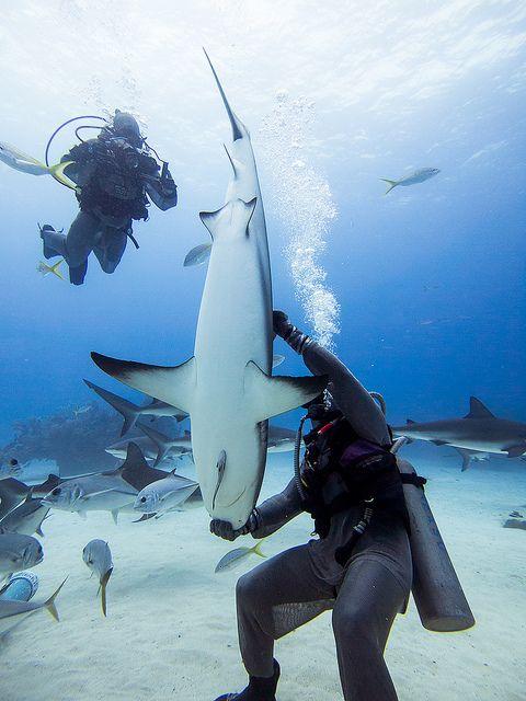 Baby Shark In Ocean
