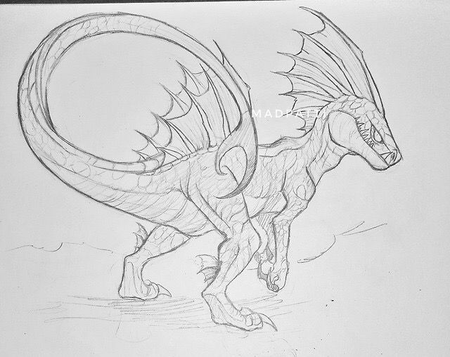Pin By David Malitzki On How To Train Your Dragon Dragon Sketch How Train Your Dragon Dragon Drawing