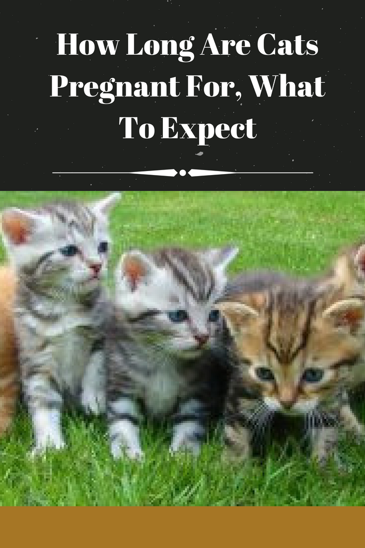 Having A Pet Female Cat Can Be An Enjoyable Experience As Is Having A Male Cat When You Own A Female Cat It Is Important To Understand And Cats Pets Pregnant