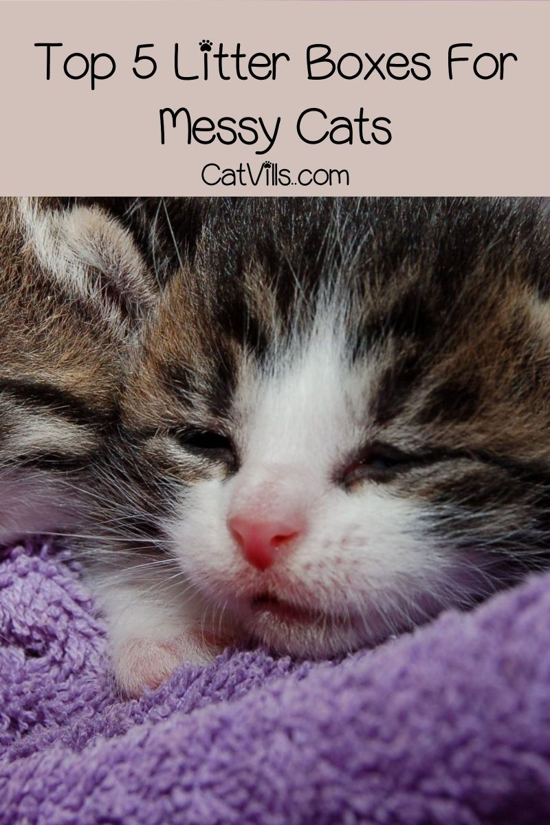 Top 5 Best Litter Boxes For Messy Cats Best Litter Box Kittens Funny Cats