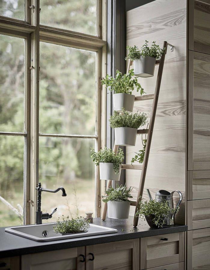 une decoration vegetale via des plantes aromatiques en cuisine