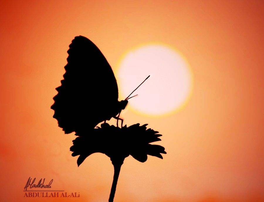 I caught a beautiful butterfly ! by Abdullah Al-Ali