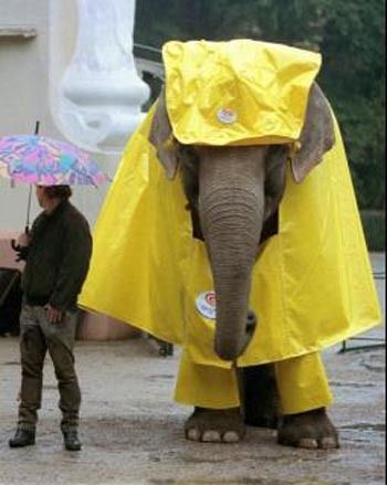Elephant In Rain Gear Elephant Funny Animals Elephant Pictures