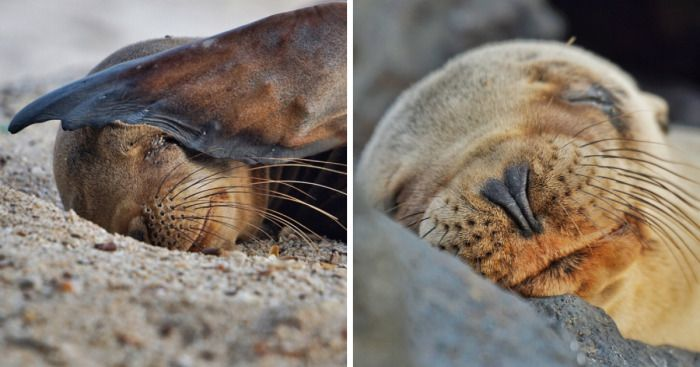 I Photographed Sea Lions In The Galápagos, And There's A Reason People Call Them The Puppies Of The Sea | Bored Panda