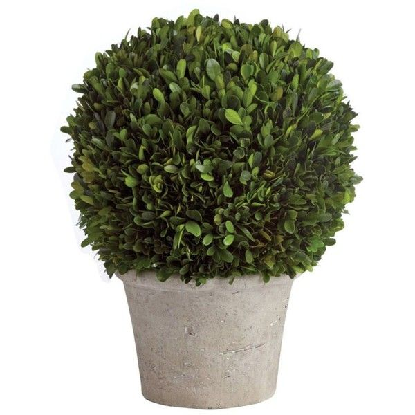 Napa Home and Garden Preserved 22 Boxwood Ball In Grey Pot Green By ($368) ❤ liked on Polyvore featuring home, home decor, floral decor, artificial flora, faux topiary, ball topiary, gray home decor, fake boxwood topiary and grey home decor